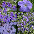 Light Purple Flowers Collage by Carol Groenen