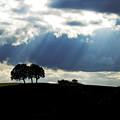 Light Rays by Margaret Hood