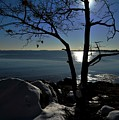 Light Snow And Stillness by Bill Driscoll
