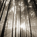 Light Through Forest by Greg Vaughn - Printscapes