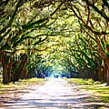 Light Through Live Oak Lane by Carol Groenen