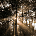 Light Through The Forest by Naman Imagery