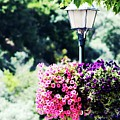 Lighted Flowers by Raquel Daniell