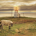 Lighthouse At Cape St. Mary's by Tracy Munson