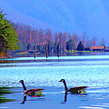 Lighthouse Geese, Smith Mountain Lake by The American Shutterbug Society