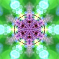 Lightmandala 6 Star 3 by Robert Thalmeier