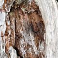 Lightning Damage In An Old Cypress Tree by Ernst Schwarz