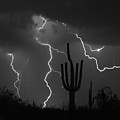 Lightning Storm Saguaro Fine Art Bw Photography by James BO Insogna