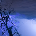 Lightning Tree Silhouette 38 by James BO  Insogna