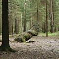 Like A Dinosaur by Sergei Dolgov