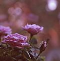 Like A Fine Rosie Of Pastels by Lance Sheridan-Peel