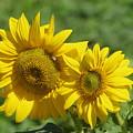 Like Two Smiles In Bloom by Jeff Swan