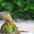 Lil Iguana by Joe Arwood
