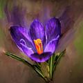 Lilac Crocus Abst.#h4 by Leif Sohlman