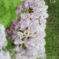 Lilac Dreams - Digital Watercolor by Debbie Portwood