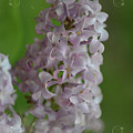 Lilac Dreams With Corner Decorations by Debbie Portwood