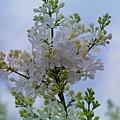 Lilac Flowers by Sonali Gangane