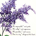 Lilac  Poem by Karin  Dawn Kelshall- Best