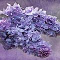 Lilac Spring by Barbara McMahon