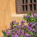 Lilacs And Adobe by Catherine Sherman