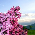 Lilacs And Green Pastures by Will Borden