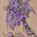 Lilacs by Quwatha Valentine