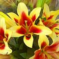 Lilies by Amy Vangsgard
