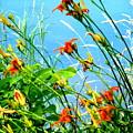 Lilies At Sheldon Marsh by Beth Akerman