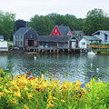 Lilies By The Bay, Cape Porpoise Me by Lucio Cicuto