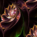 Lilies by Dana Furi