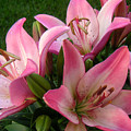 Lilies In Company by Lucyna A M Green