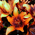 Lilies In The Shadow by Jasna Dragun