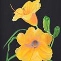 Lilies Of September by Belinda Nagy