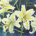 Lilies So White by Lois Mountz