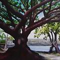 Liliuokalani Park Tree by Ethel Mann