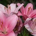Lillies by Lori DeBruijn