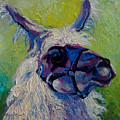 Lilloet - Llama by Marion Rose