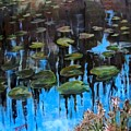 Lilly Pads And Reflections by Barbara O'Toole