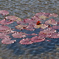 Lilly Pads by Melissa Parks