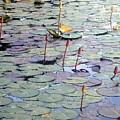 Lilly Pond by Nila D