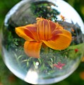 Lilly Thru A Crystal Ball by Jo-Ann  Matthews