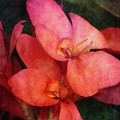Lily 1106 Idp_2 by Steven Ward