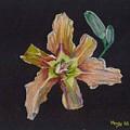 Lily 2 by Mendy Pedersen