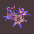 Lily Flowers Blue Maroon by Susanna Katherine
