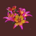 Lily Flowers Pink Maroon by Susanna Katherine