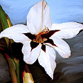 Lily I by Patricia Griffin Brett