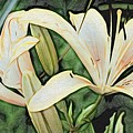 Lily - Id 16217-152054-3169 by S Lurk