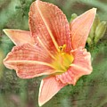 Lily In A Haze by Cathie Tyler