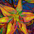 Lily In Abstract by Debra Lynch