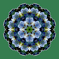 Lily Medallion by Lynde Young